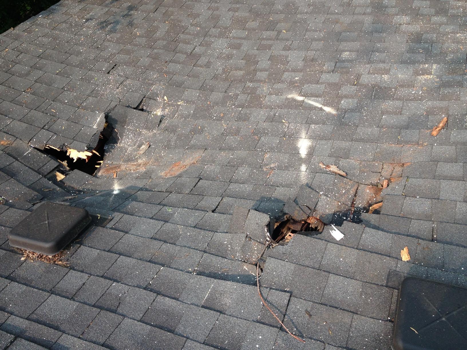Fallen Tree & Wind Damage in Rolling Meadows IL - Before Photo
