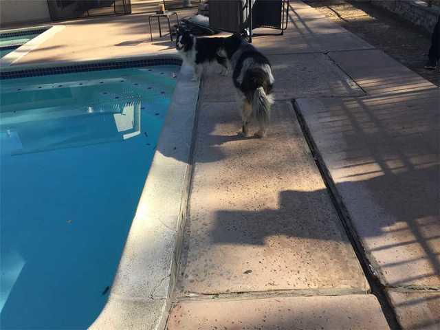 Fixing a Swimming Pool Deck in San Diego