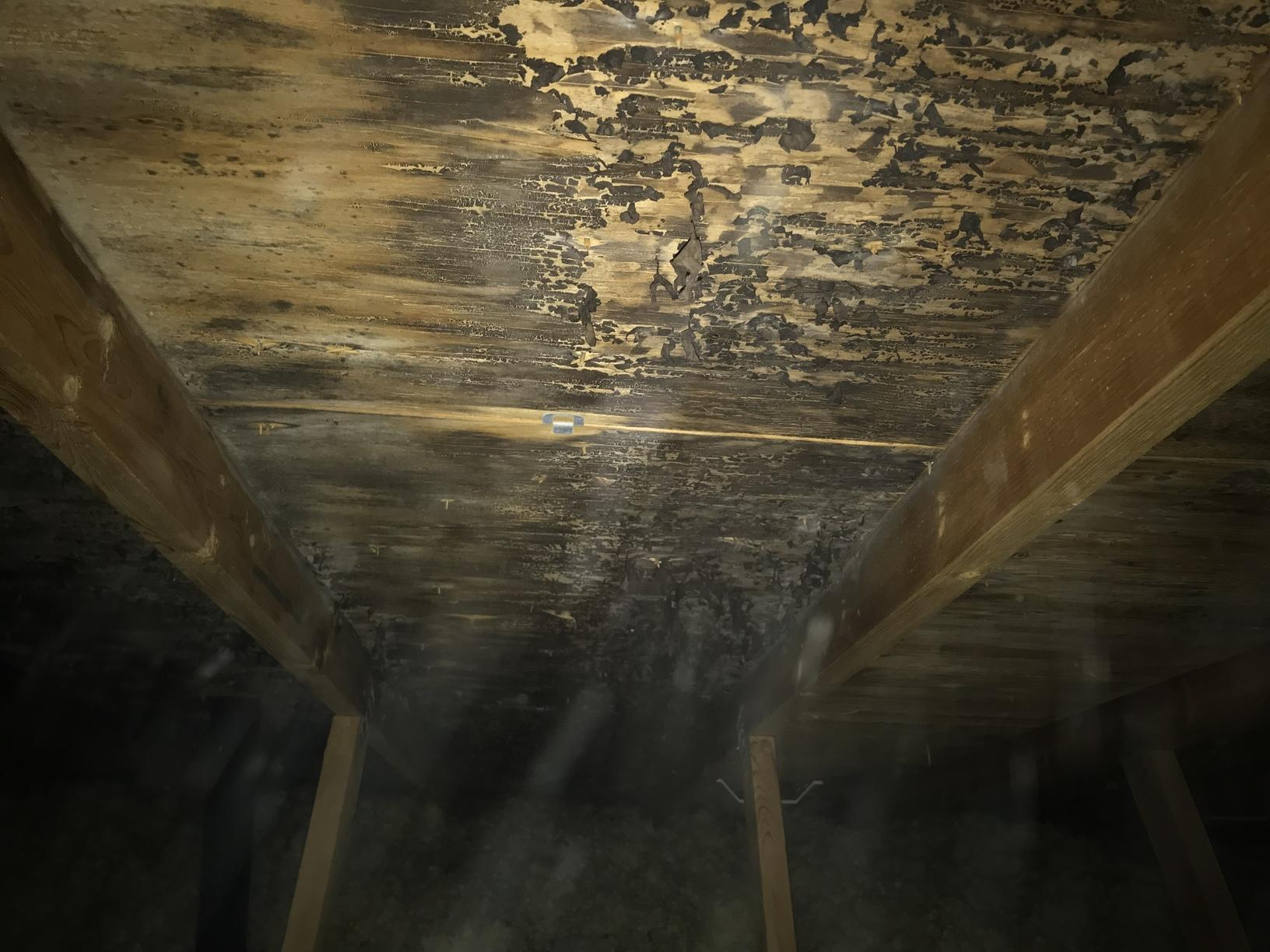 Mold Removal and Traditional Air Seal/Insulate Attic in Appleton, WI - Before Photo