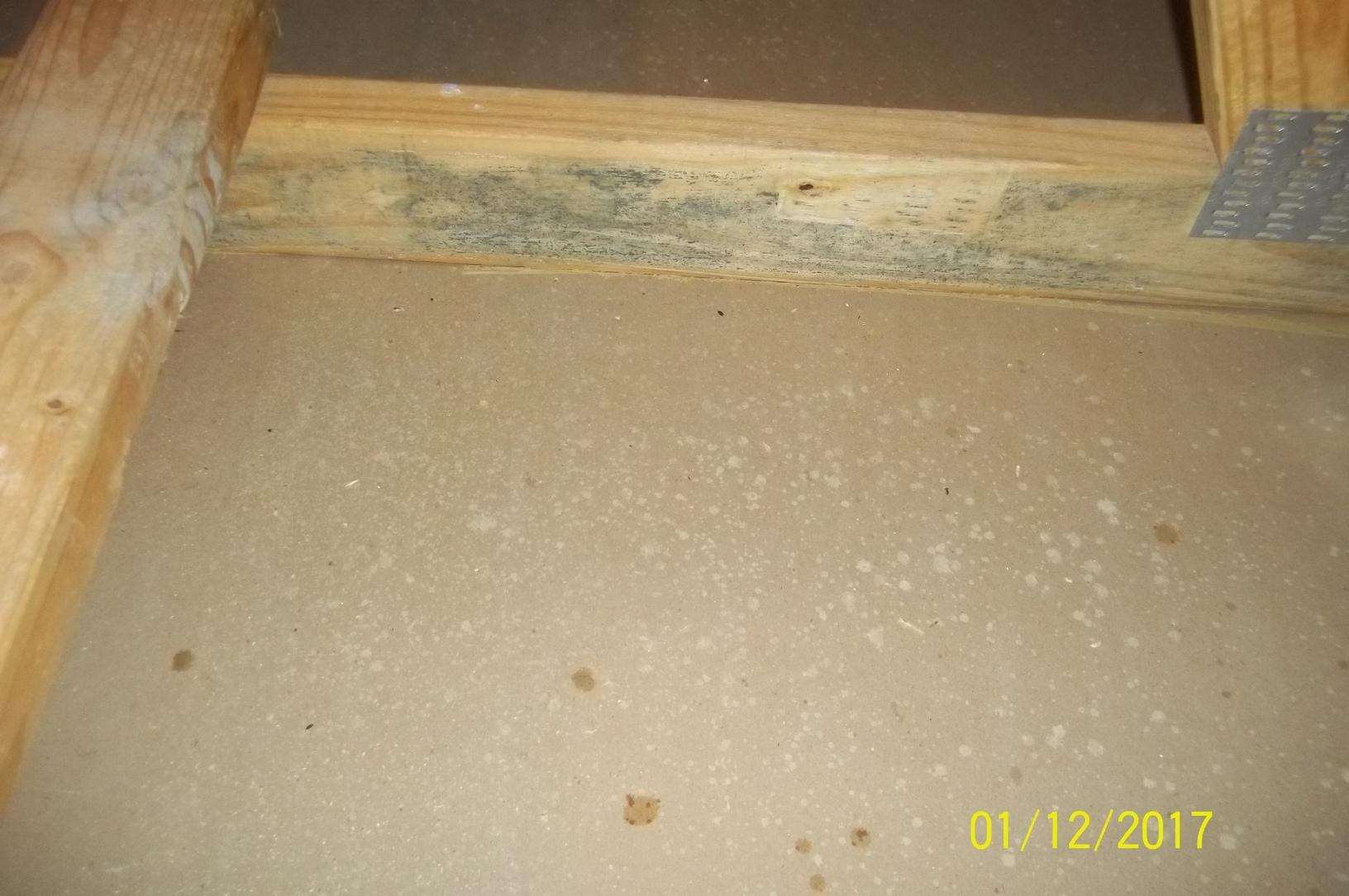 Mold Treatment- Leesburg, VA - Before Photo