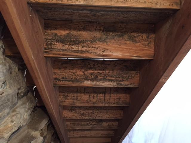 Moldy Basement Stairs - Before Photo