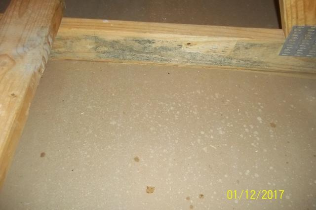 Mold Treatment- Leesburg, VA