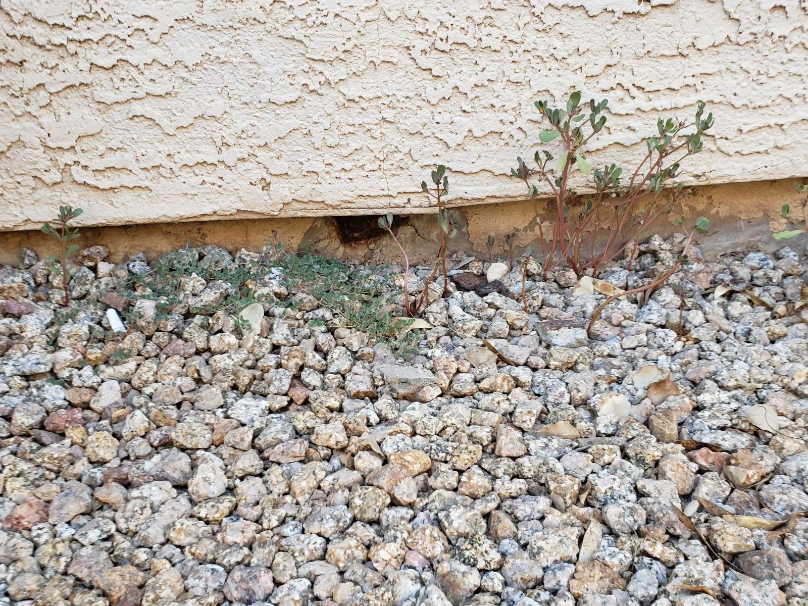 Chandler, AZ  Concrete Stem Wall Repair - Before Photo
