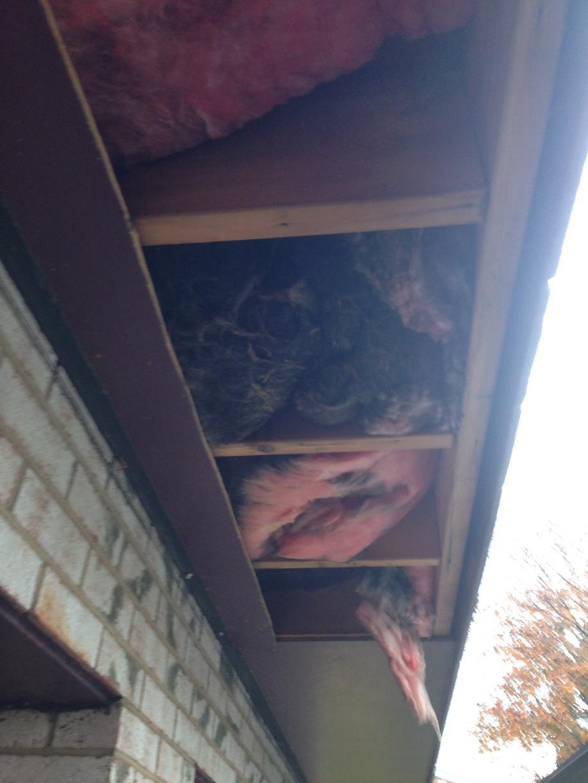 SilverGlo insulation, Gibsonia, PA - Before Photo