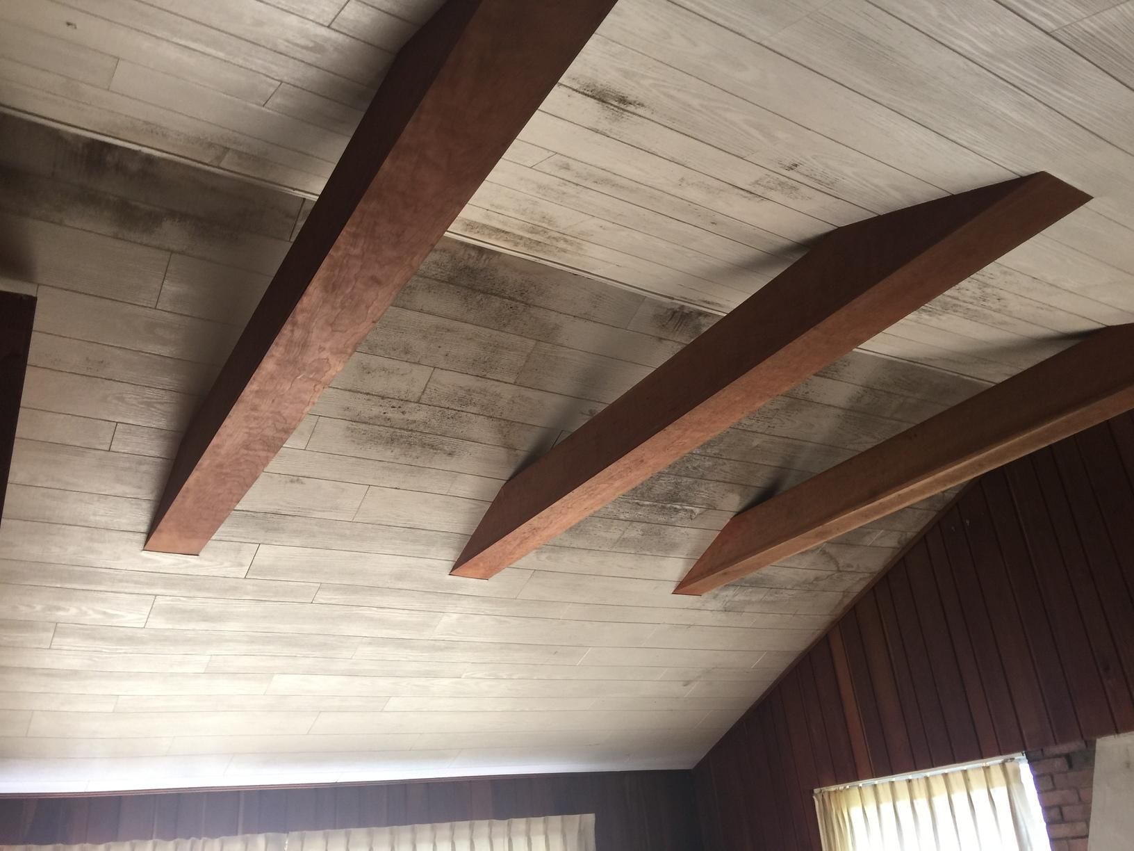 Follansbee WV Mold Removal - Before Photo