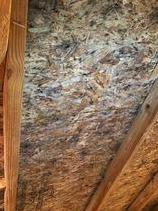 Mold Removal Wexford PA