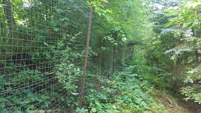 Deer Fence Installation in Cannonsburg, PA