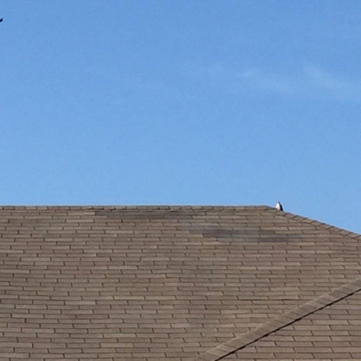 Shingle Repair in Wichita Falls, TX - After Photo