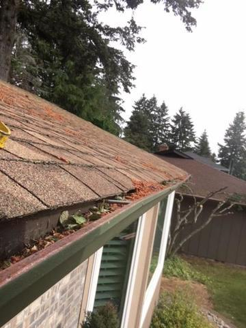 Valor Gutter Guard & gutters - Fircrest