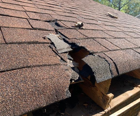 Tree Damage repair in Powder Springs, GA