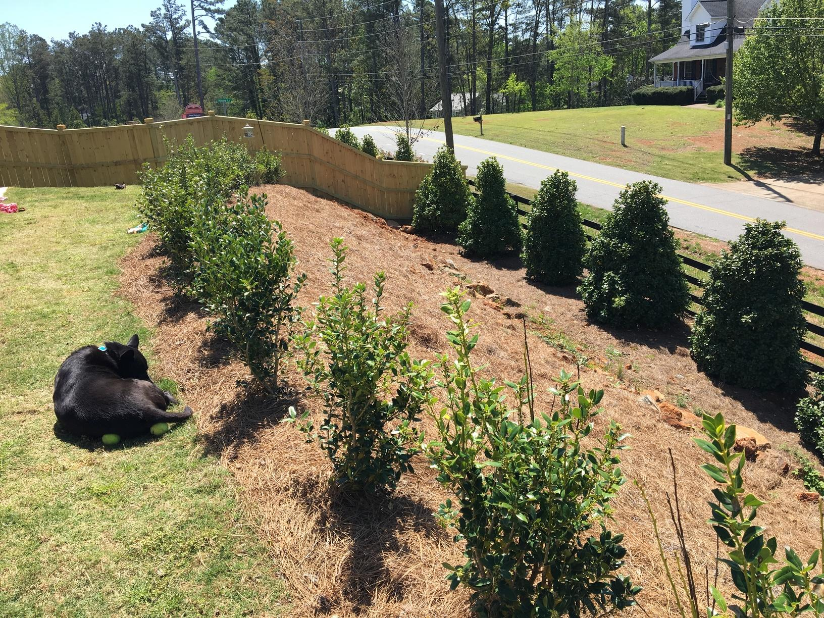 Utilizing a Steep Slope in Woodstock, GA - Before Photo