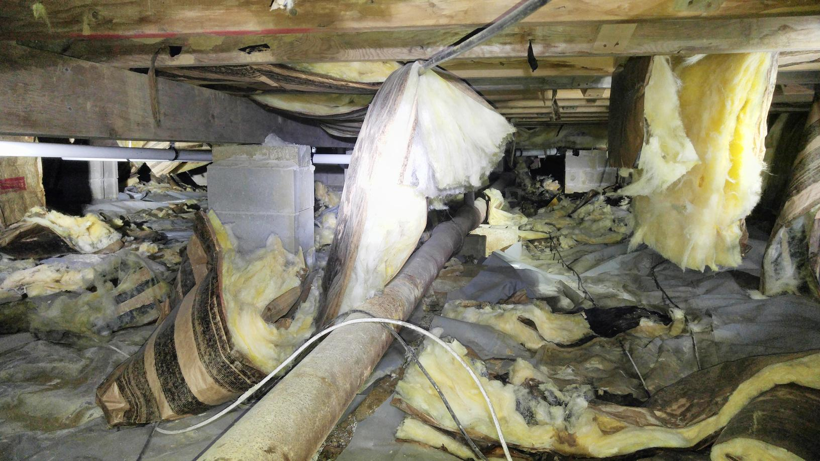 Mold in Crawl Space Require Major Clean-out and Treatment in Freehold, NJ - Before Photo