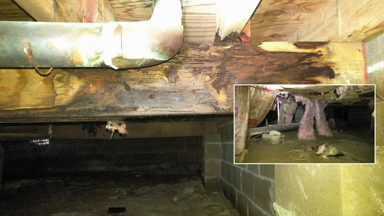 Full Clean up of Moldy Crawl Space in Englishtown, NJ - Before Photo