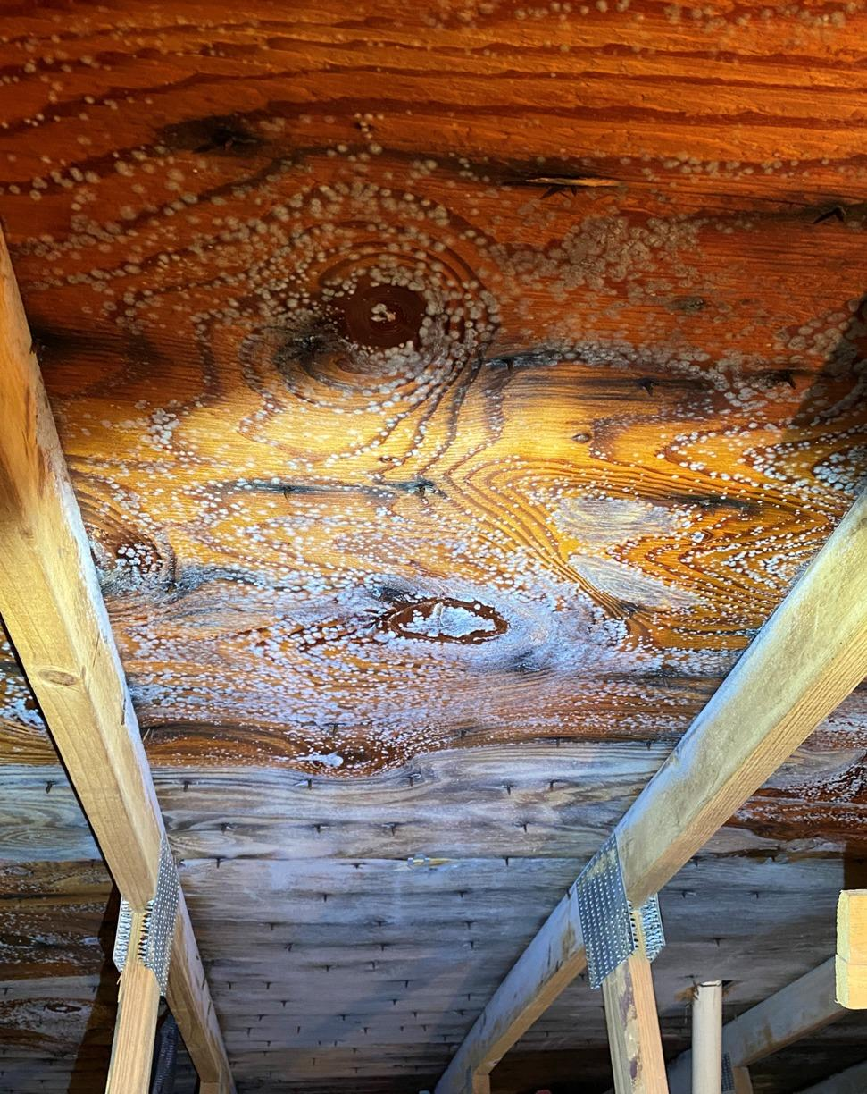 Removing Mold in the Attic for A New Homeowner in Trenton, NJ - Before Photo