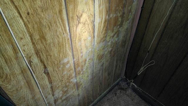 Mold Treatment and Removal in Rumson, NJ
