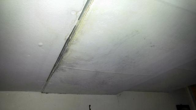 Mold Needs to be Removed in Order to Sell Home in Holmdel, NJ