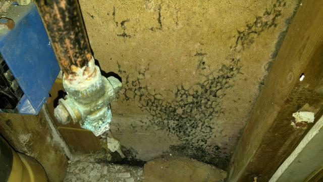 Improperly Installed Dryer Vent Causes Mold in Fair Haven, NJ