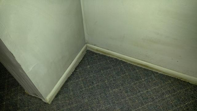 Hot Water Heater Burst and Causes Mold in Shrewbury, NJ