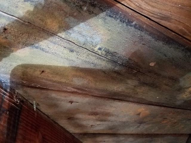 Basement Mold in Lincroft, NJ Home