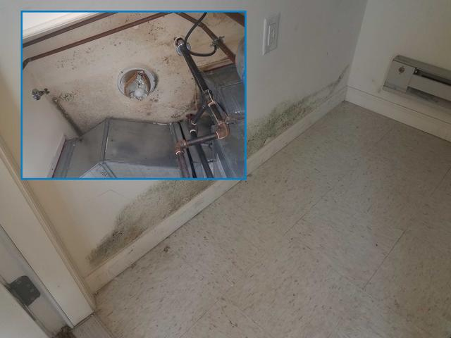Leak leads to mold in Lakewood, NJ apartment