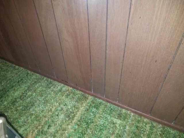 Mold Found On Paneling Throughout Basement in Brick, NJ