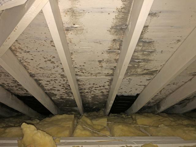 Mold Removal in Asbury Park, NJ