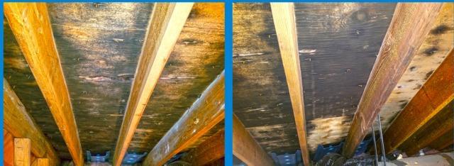 Attic Mold Remediated in Old Bridge, NJ