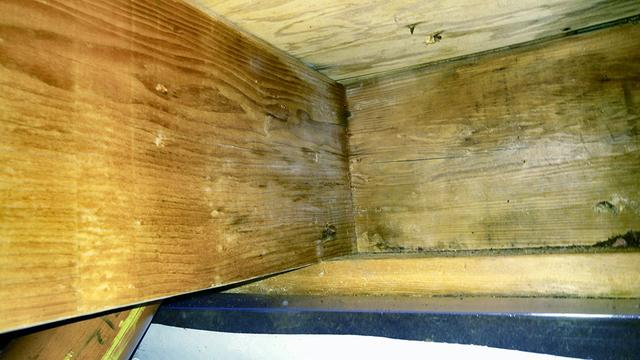 Mold removal from floor joists in Delran, NJ
