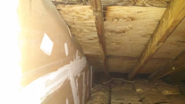 Mold Removal in East Brunswick, NJ Attic
