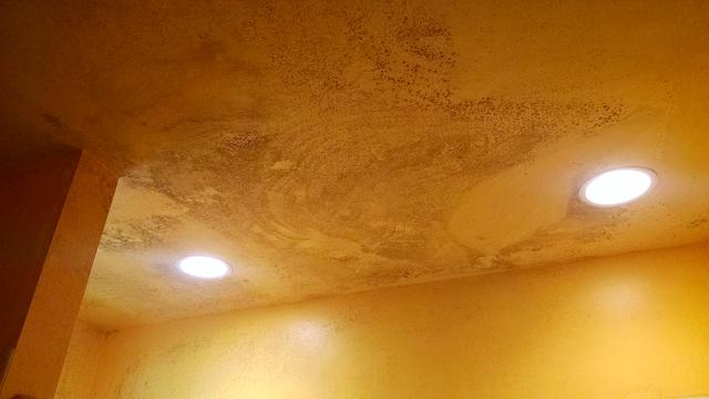 Bathroom Mold Removal & Remediation in Cliffwood, NJ