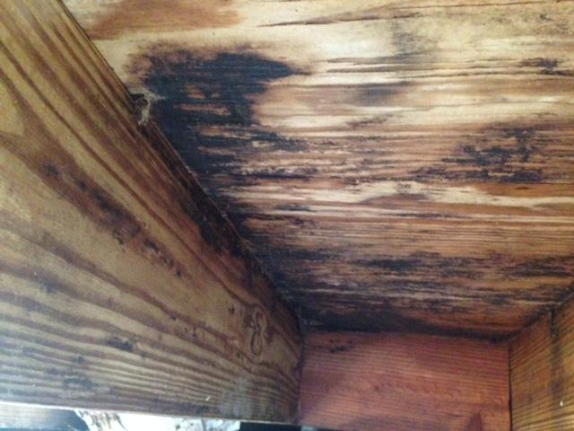 Mold Remediation in Dorchester, SC - Before Photo