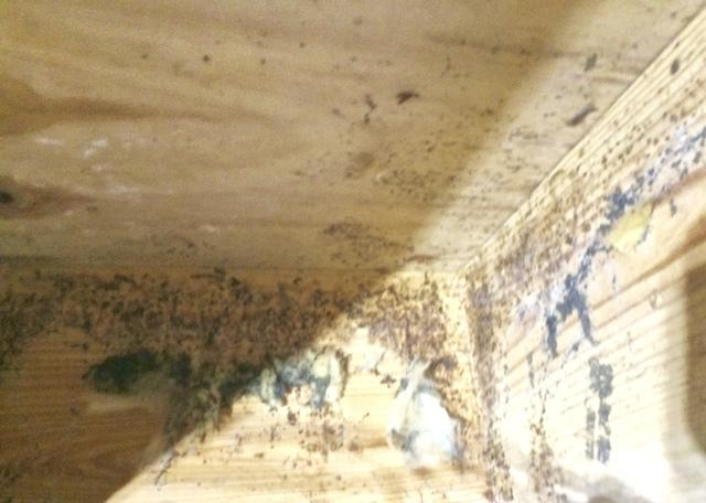 Microbial Mold Growth in a Mount Pleasant Crawlspace - Before Photo