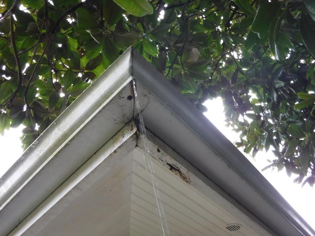 Leaky Gutters Replaced in Seattle, WA - Before Photo