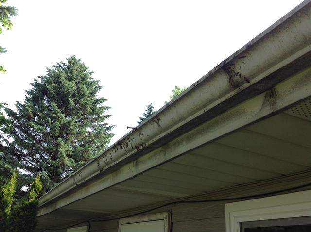 LeafGuard Gutters installed in Coleman, WI