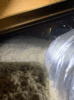 Cellulose Insulation- Woodbury, NY