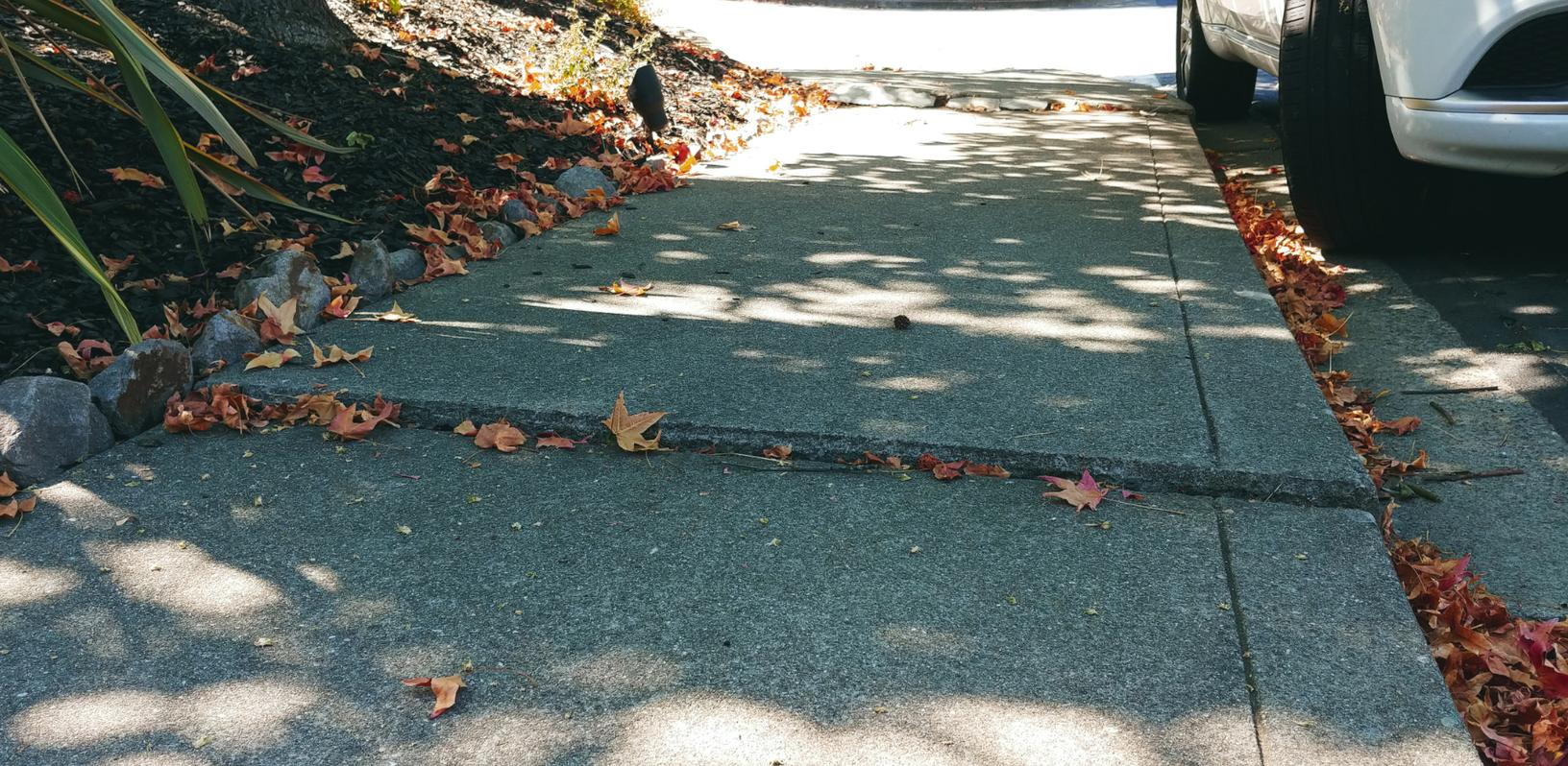 Remove Tripping Hazard from Sidewalk of Martinez, CA Home - Before Photo