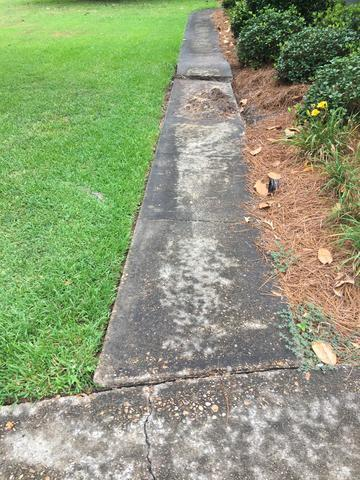 Severely Uneven Concrete Walkway in Monroe, LA