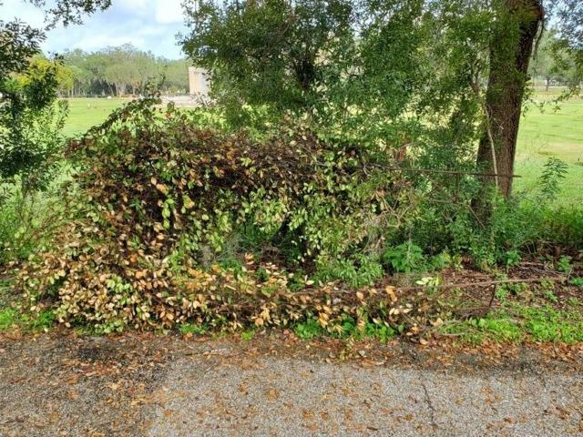 Yard Debris Removal in Palmetto, FL