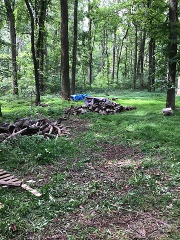 Brush Cleanup in Broad Run, VA
