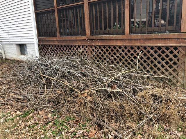 Yard Debris Removal in Fairfax Station, VA - Before Photo