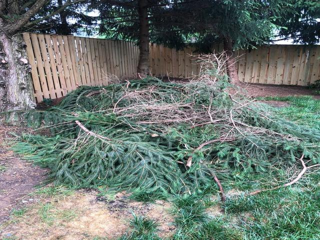 Yard Debris Removal in Bristow, VA