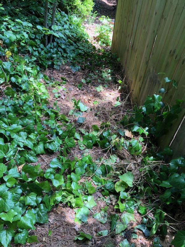Yard Cleanup in Cumming - After Photo