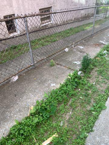 Backyard Cleanup in Brooklyn, NY