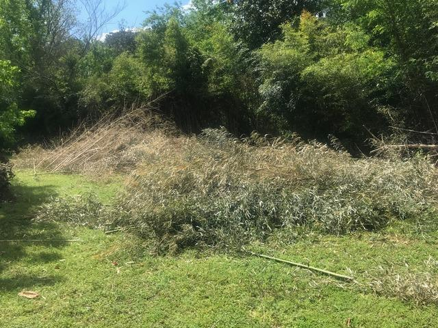 Yard Waste removal in Apex