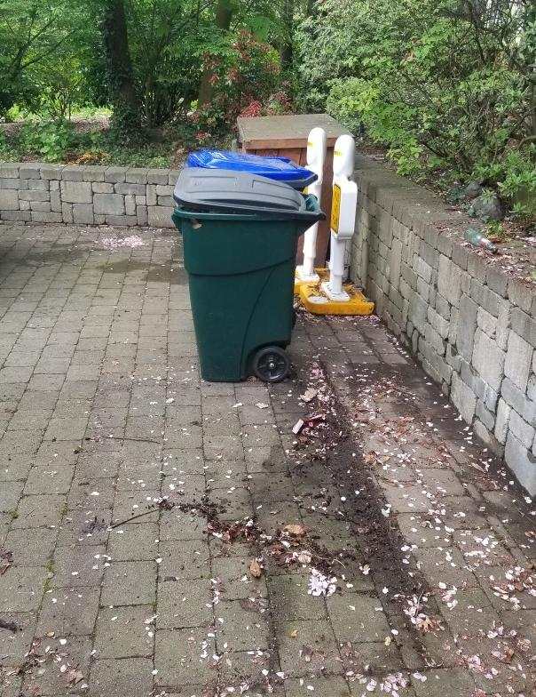 Driveway Cleanup in Scarsdale, NY - After Photo