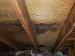 Mold in attic Ann Arbor - Before Photo