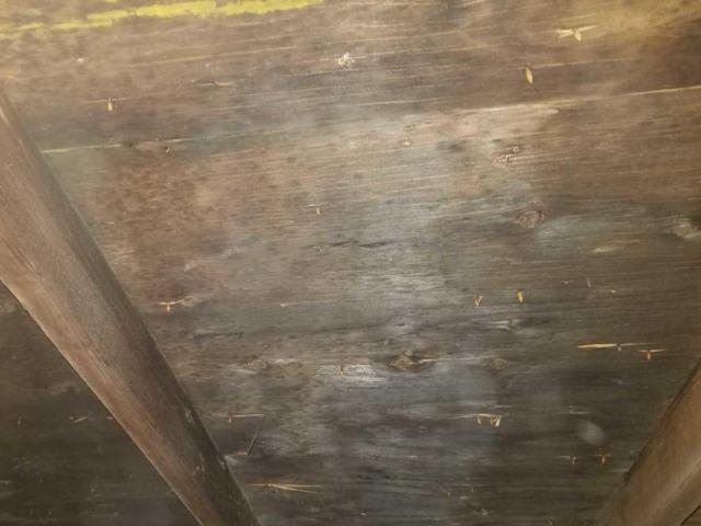 Mold Remediation Pinckney, MI