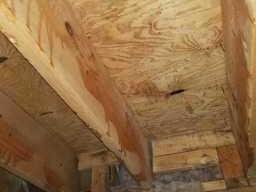 Mold in attic Milford, Michigan