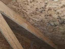 Mold in attic Pinckney, MI