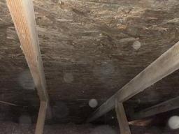 Mold in Attic, Pinckney